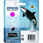Epson T7603 Magenta Original